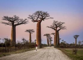 زیبا ترین جاده در ماداگاسکار